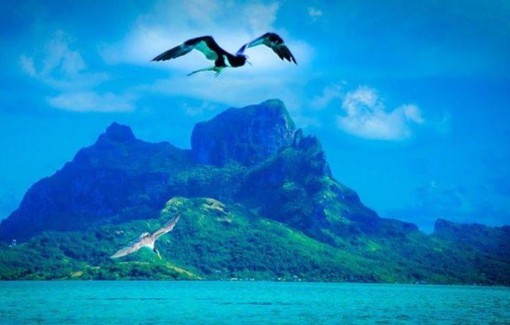 The Coming Polynesian Union