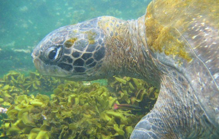 Trump Threatening the World's Most Eco-Sensitive Habitats